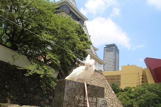 小倉城 2016-7-27-3