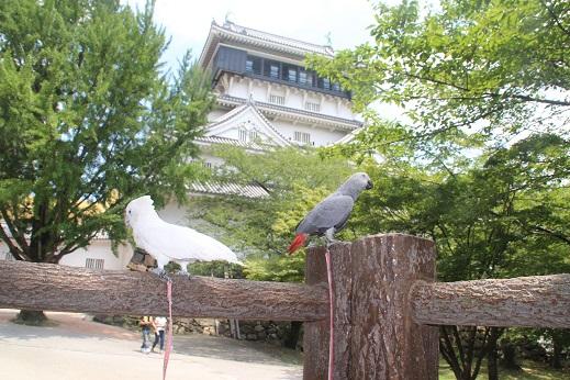 小倉城 2016-7-27-5