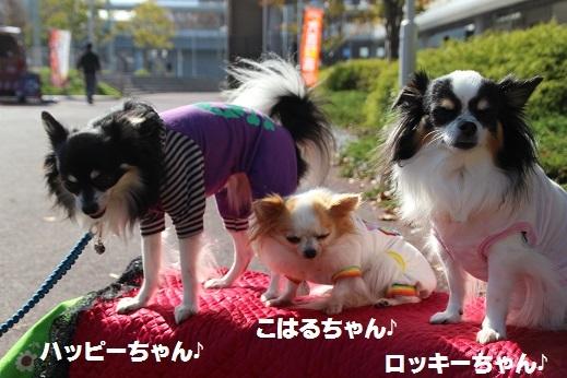 愛護フェスティバル1 2016-11-12-8