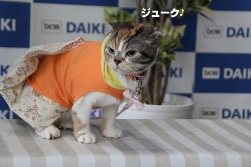 ダイキ下関 2016-11-27-1