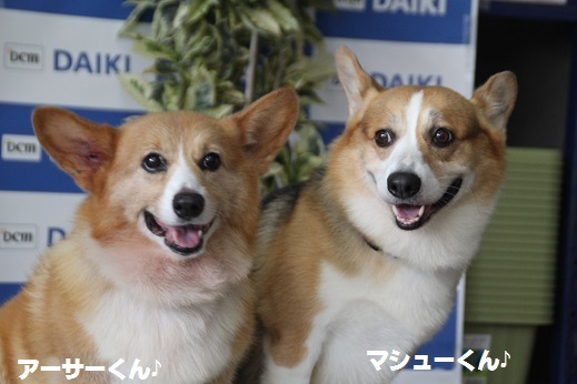 ダイキ下関 2016-11-27-8