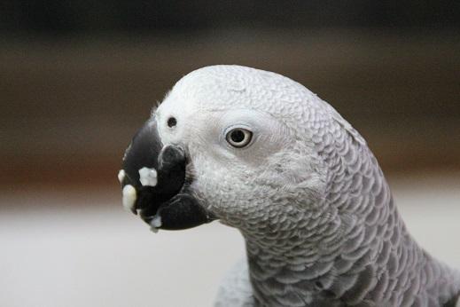 鳥シャンプー その2