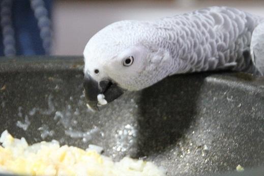 鳥シャンプー その1