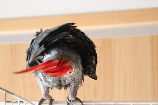 鳥シャンプー その10