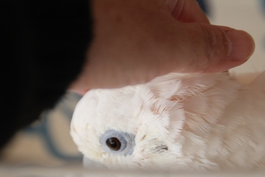 鳥シャンプー その11