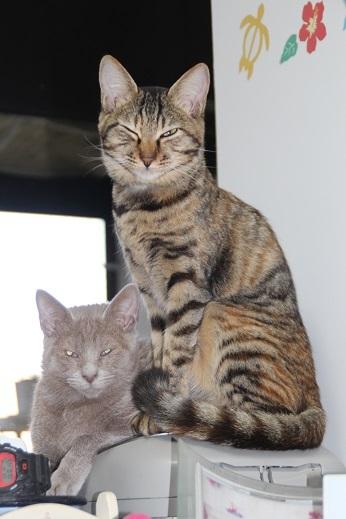ルキノ&シーマ