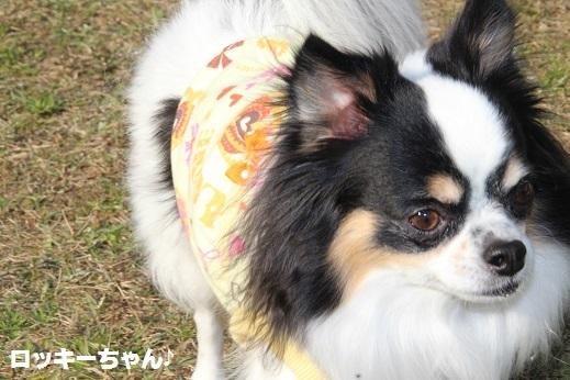 ふらってぃーさん2 2016-12-11-6