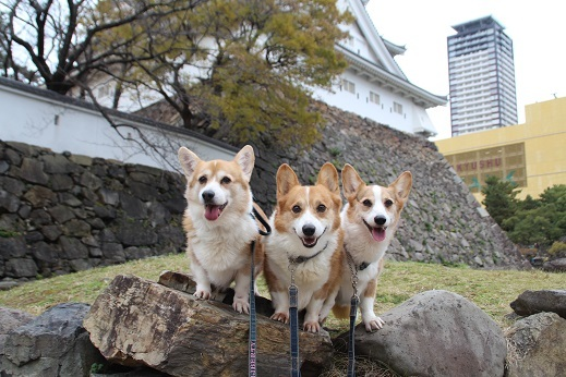 小倉城1 2016-12-12-1