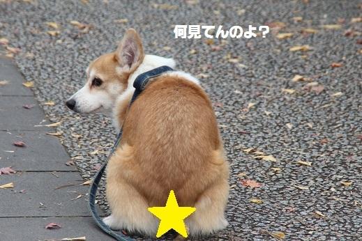 小倉城1 2016-12-12-5