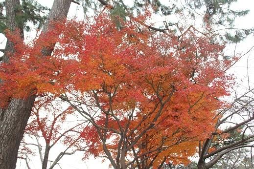 小倉城2 2016-12-12-3