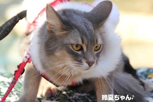 ピクニカ1 2016-12-18-8