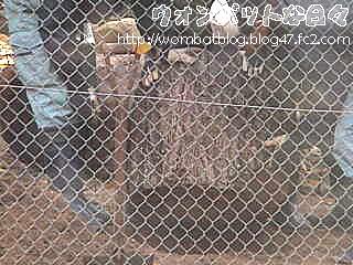 c0298(切り株セッチ007)
