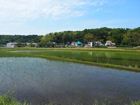 P5290573 田園風景