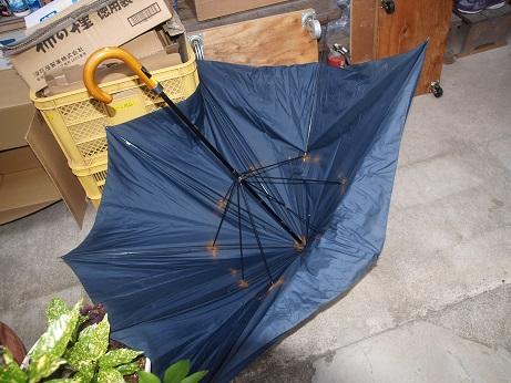 P6140024 壊れ傘