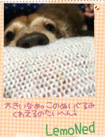 20160725220711404.jpg