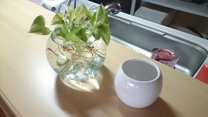夏用ポトス鉢