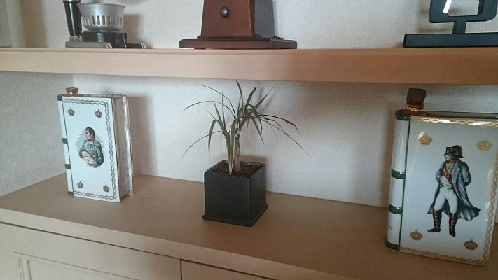 観葉植物②設置
