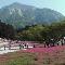 秩父の山の風景写真