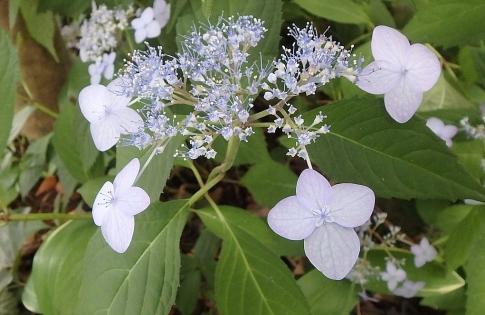 庭の花 002-001