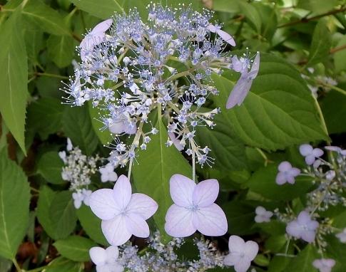 庭の花 003-001