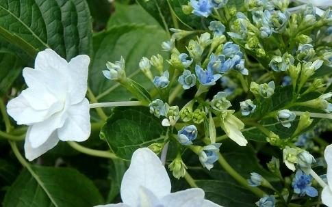 庭の花 004-001