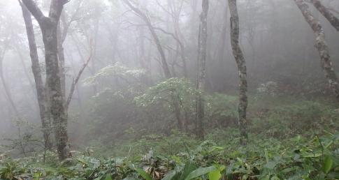牛曳山~伊良谷山 066-001