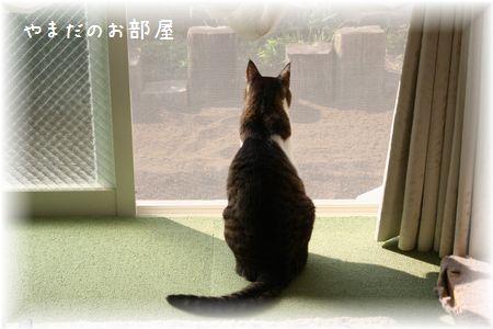 2016.5.21のスージー①
