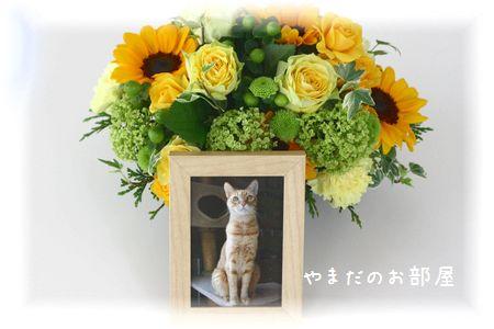 2016年 チャンちゃん命日のお花①