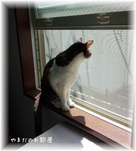 2016.4.20のスージー①