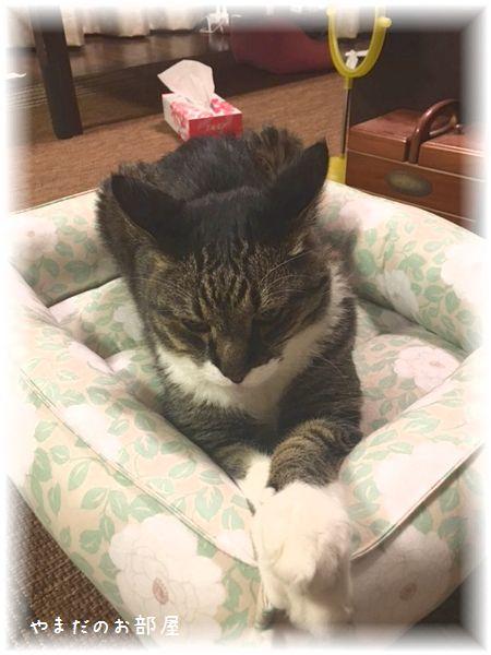 猫ベッドとトラキチ③