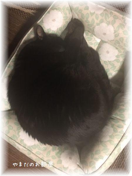 猫ベッドとQ太郎②