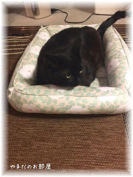 猫ベッドとQ太郎①