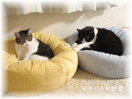 2008.1.12のナオミとスーちゃん
