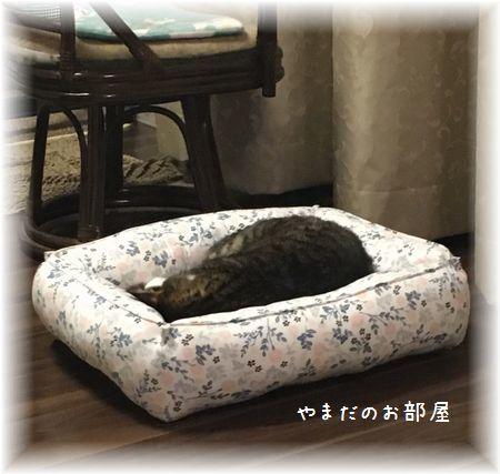 お送りした猫ベッド①