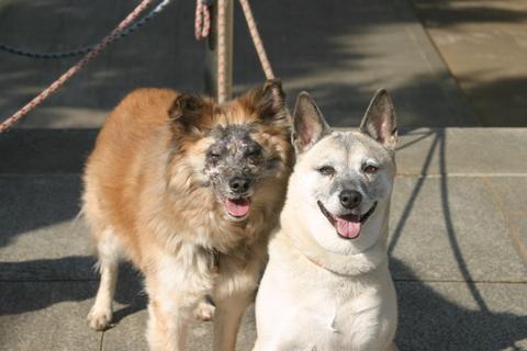 犬たち0134