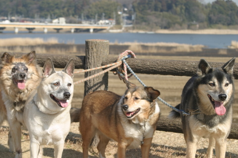 犬たち0145