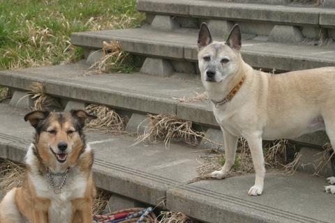 犬たち20019