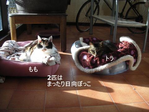 りん&ラスク0074