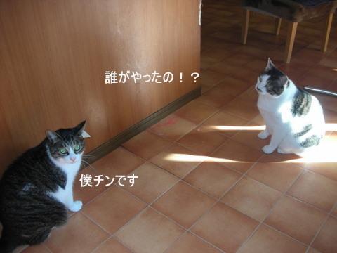 りん&ラスク0071