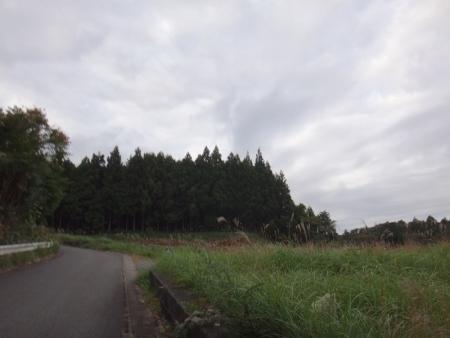 DSC06513.jpg