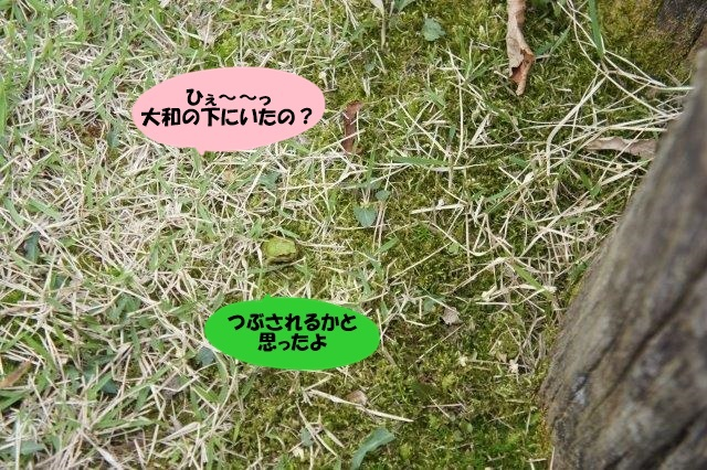 DSC01000_20160421183923d87.jpg