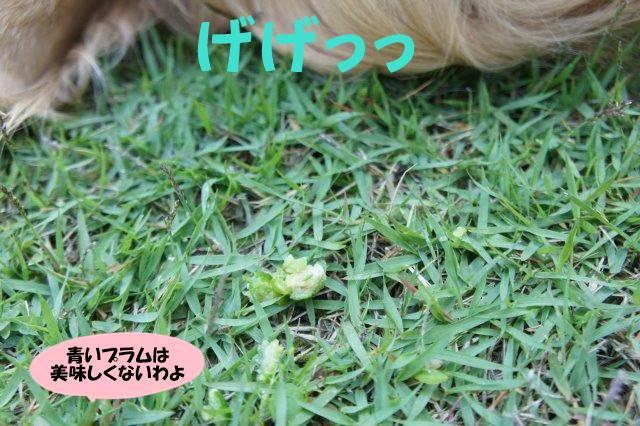 DSC01554_20160523201909b8a.jpg