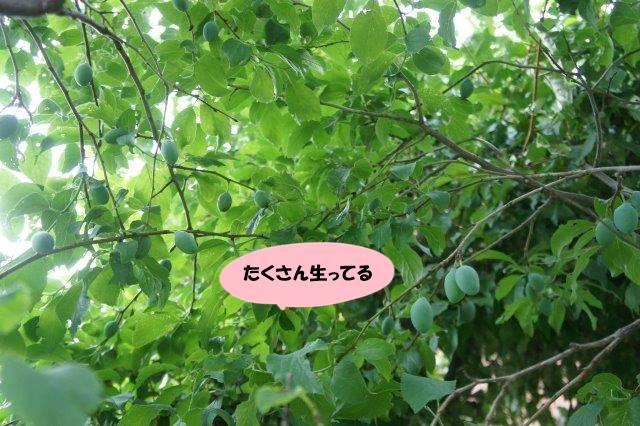 DSC01829_2016060720483012b.jpg