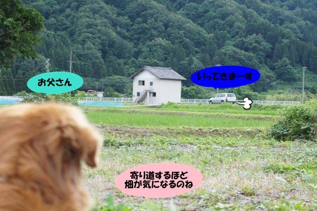 DSC01933_20160616203646ce2.jpg