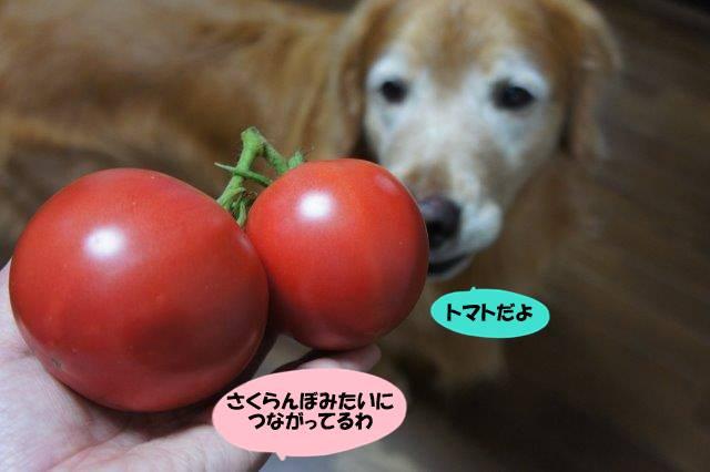 DSC02546_201608091930385ca.jpg
