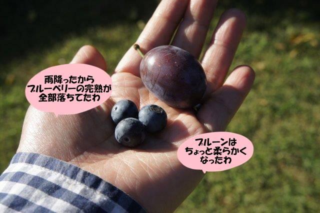 DSC02754.jpg