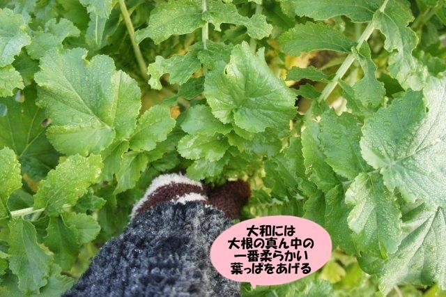 DSC03824_20161121194649b88.jpg