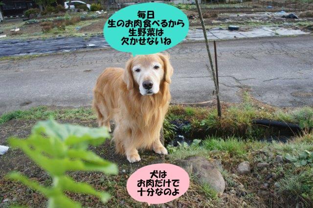 DSC03825_2016112119465131f.jpg