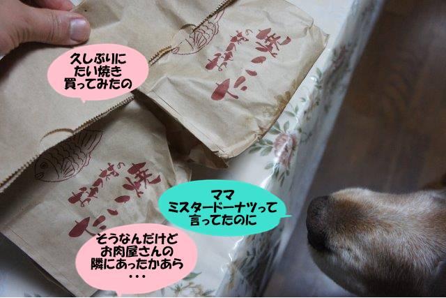 DSC03899.jpg