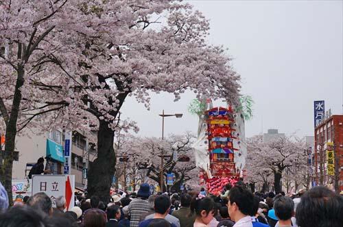 桜と風流物